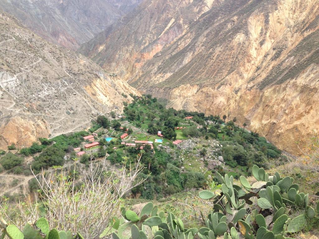 Colca Canyon Peru Oasis