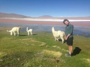 Bolivia Alpaca Llama